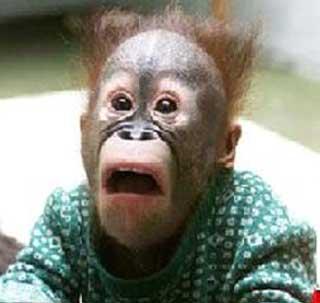 funny-monkey-2.jpg (320×303)