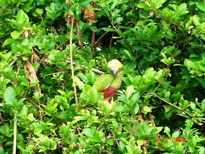 http://2.bp.blogspot.com/_JQmQgAepGgk/SYmZ2gSs8bI/AAAAAAAABy4/cSQMgYeqrmc/s400/papagaios2.JPG
