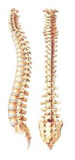 Illustration of spinal column.