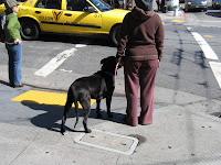 Dog and owner waiting for traffic light to change. Castro - San Francisco, CA 94114