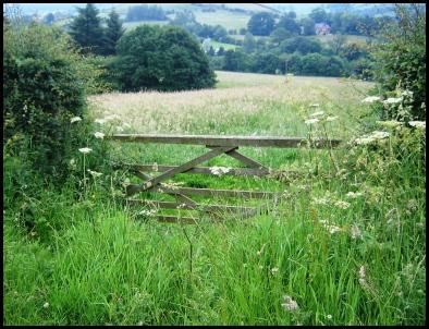 Gate into field