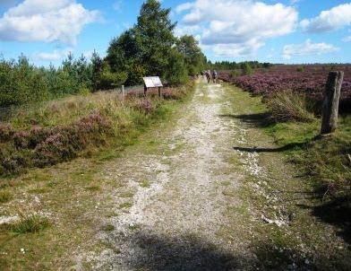 Track on Reivaulx Moor