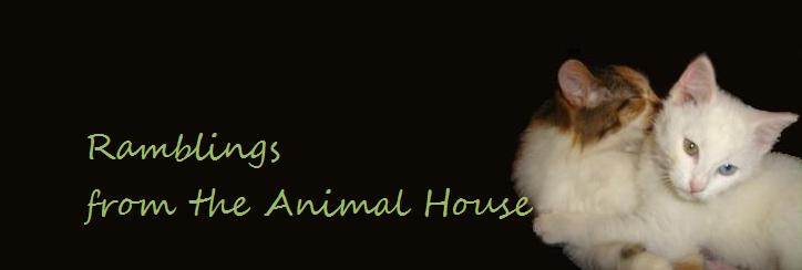 Ramblings from the Animal House