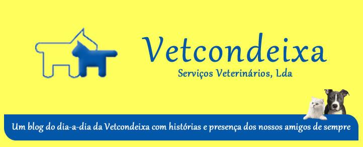 BlogoVetCondeixa