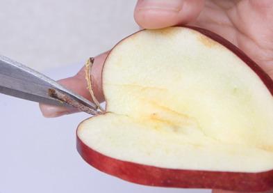 Tempelkan potongan apel sebelumnya.