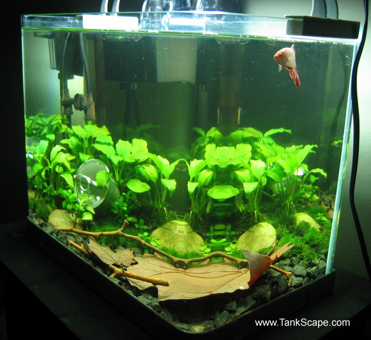 Tank scape my betta tank the river bed for Betta fish plant tank