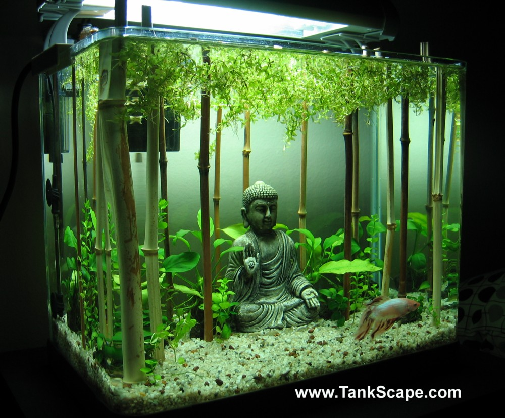 Betta paradise for Decoration zen aquarium