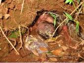 Abortado, enterrado e sobreviveu -fotos chocantes, mas vitoriosas.