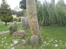 flora altiplanica