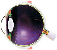 bola mata manusia