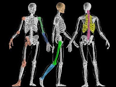 Gambar bentuk kerangka manusia
