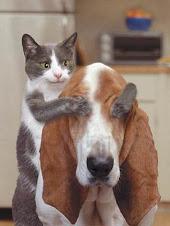 """""""Como perro y gato?"""""""