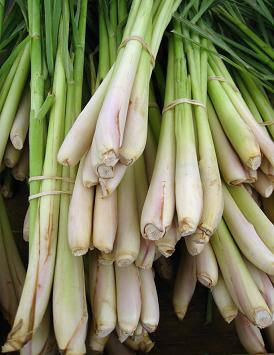 Lemon grass stalks