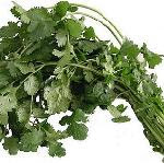 common coriander