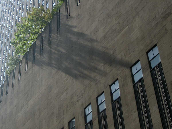 Summer Shade - At Rockefeller Center.