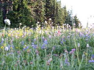 Meadow on Nasquilly Vista Trail