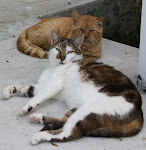 Abaco Kitties