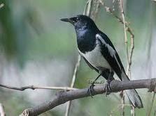 Burung5