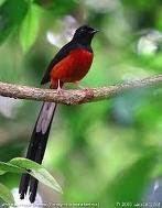 Burung2