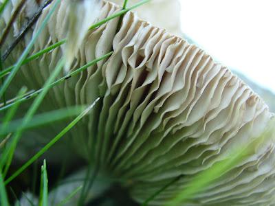 mushroom in detail