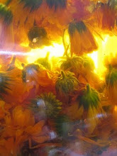 calendula oil for the healing balm