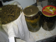 Tincture straining Wormwood for the Liver Cleanse