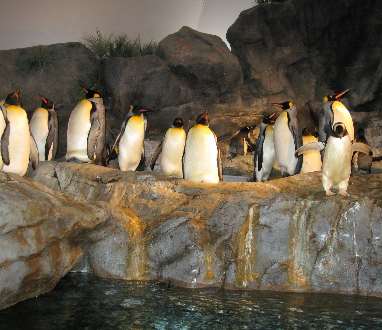 penguins dating