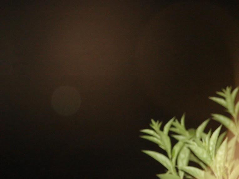 Ultimo Avistamiento Ovni ''NIBIRU'' negro y rojo 24/enero/2010 sec DSC05266 jpg