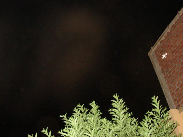 Ultimo Avistamiento Ovni ''PICAFLOR'' apuntando a NIBIRU y sus formas 28/enero/2010 sec