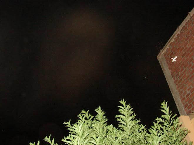 Ultimo Avistamiento Ovni 28/enero/2010 en la pared de ladrillos'' PICAFLOR'' ET apuntando  x Rodolf