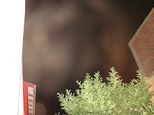 Ultimos Avistamientos Ovni Alien felino 31/ene/2010 hrs 04:20:00 am DSC05591jpg sec x Rodolfo Truji
