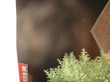 Ultimos Avistamientos Ovni Alien felino 31/ene/2010 hrs 04:20:22 am DSC05591jpg sec x Rodolfo Truji