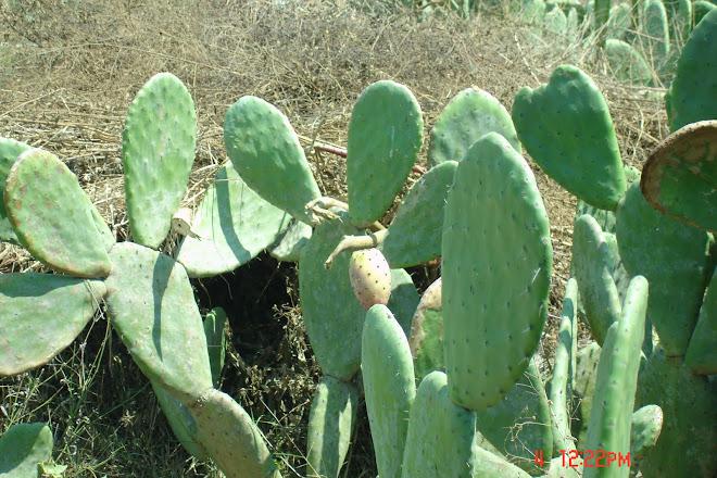 Bio Huerto Shambala Santa Rita 2009
