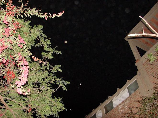 Formas Ovni Inteligentes Insectos Mariposas  18/12/09