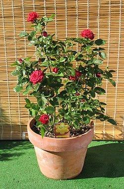 http://2.bp.blogspot.com/_JdSlK2K3fuA/SbA76uL9T_I/AAAAAAAAAxM/B4tA2coPU5s/s400/plantaornamental.jpg