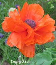 Vackert i trädgården