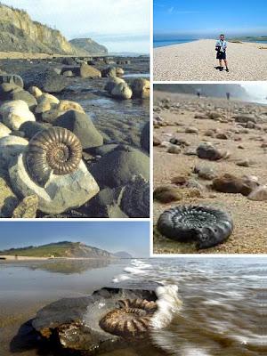 пляж с органическими останками