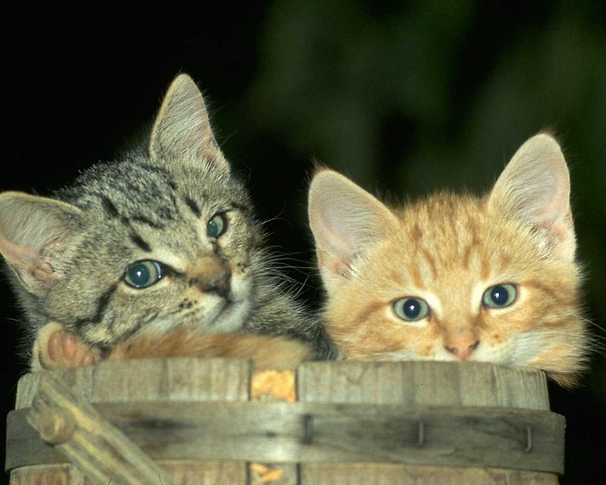 http://2.bp.blogspot.com/_JeUtUmGrBfM/TNVvMSHubGI/AAAAAAAAADo/2Z9IqlpIdpg/s1600/Animal+Domesticated.jpg