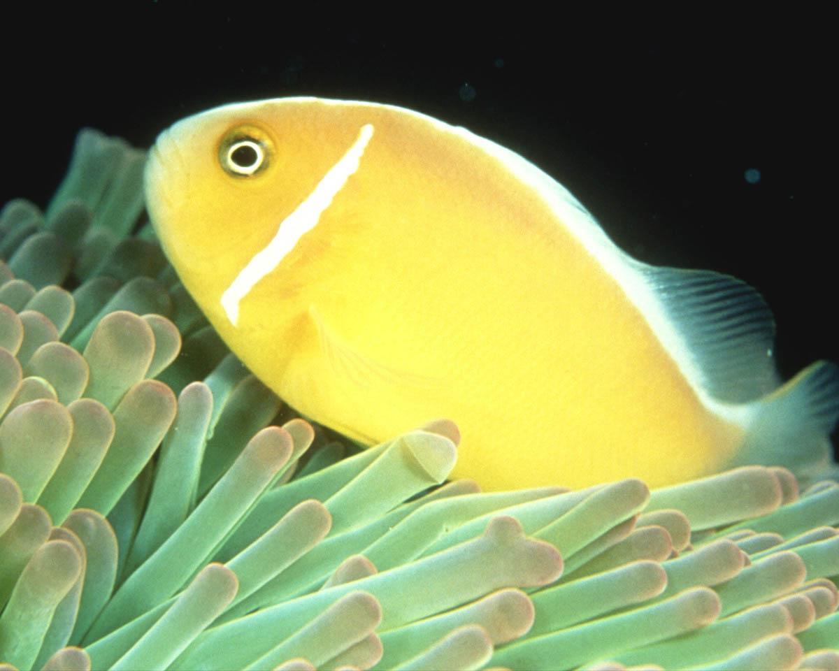 http://2.bp.blogspot.com/_JeUtUmGrBfM/TNVx_vEyLpI/AAAAAAAAAD4/hH5PsHCuxGs/s1600/Animal+Aquatic.jpg