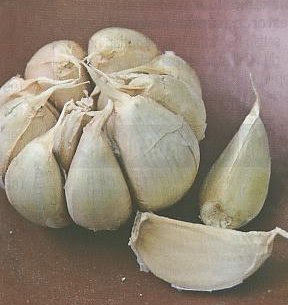 today food GARLIC benefits for health