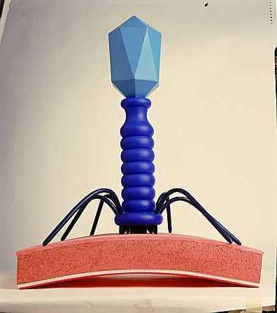 http://2.bp.blogspot.com/_JfenxZ0SO1A/R1LCwYtUQMI/AAAAAAAAAC0/dRWTs2WWn2c/s1600-R/virus.jpg