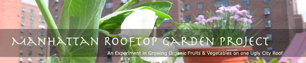 Manhattan Rooftop Garden Project