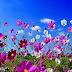 Λουλουδένιο παραμύθι...