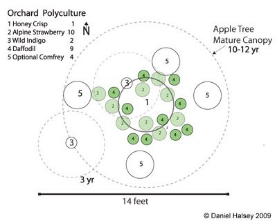 Orchard Layout Plans http://southwoodsforestgardens.blogspot.com/2009/01/orchard-polyculture-design.html