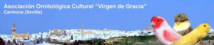 """Asociación Ornitológica """"Virgen de Gracia"""". Carmona (Sevilla)"""
