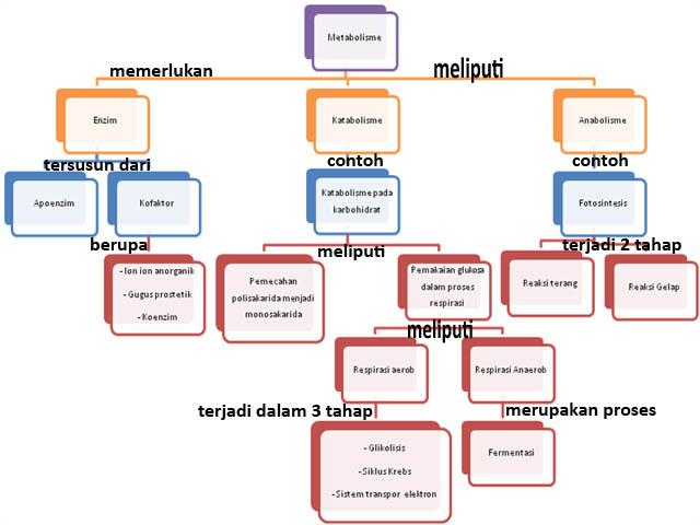 Peta konsep bab Metabolisme
