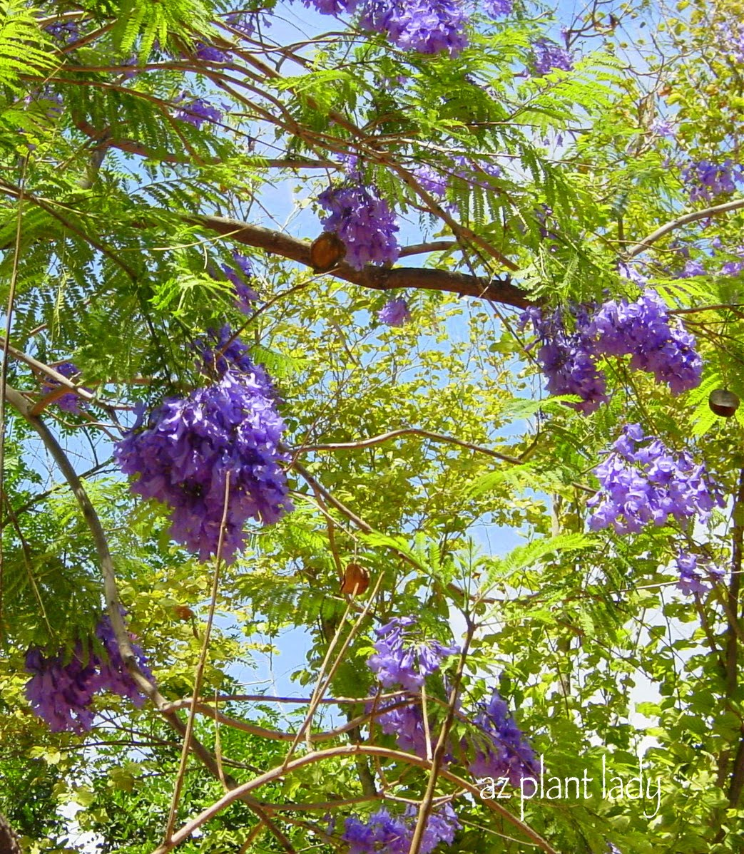 A wonderful dilemma part 2 ramblings from a desert garden for Best flowers to grow in california