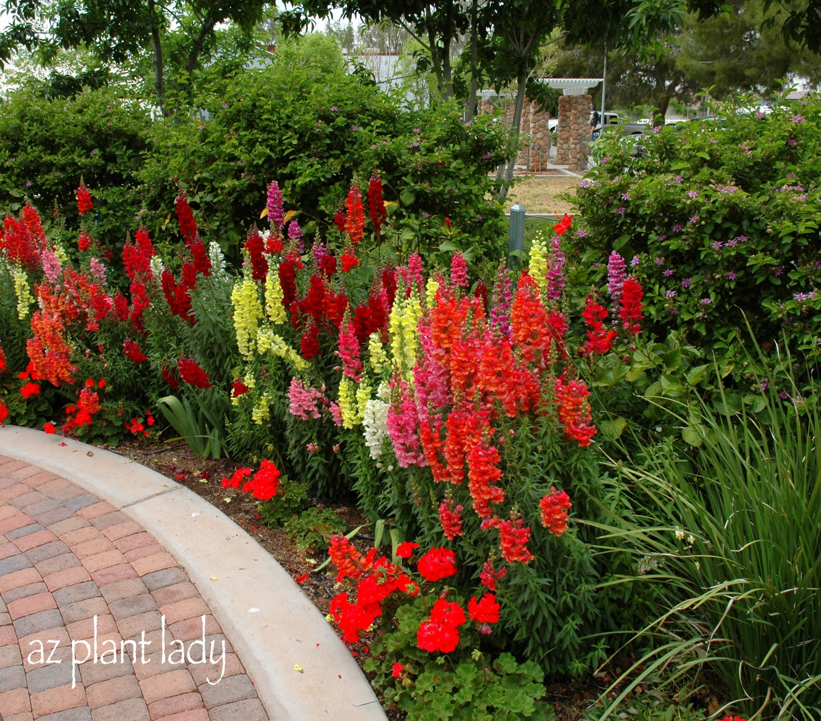 Curing the Garden Blahs with Color - Ramblings from a Desert Garden