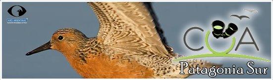 Club de Observadores de Aves Patagonia Sur