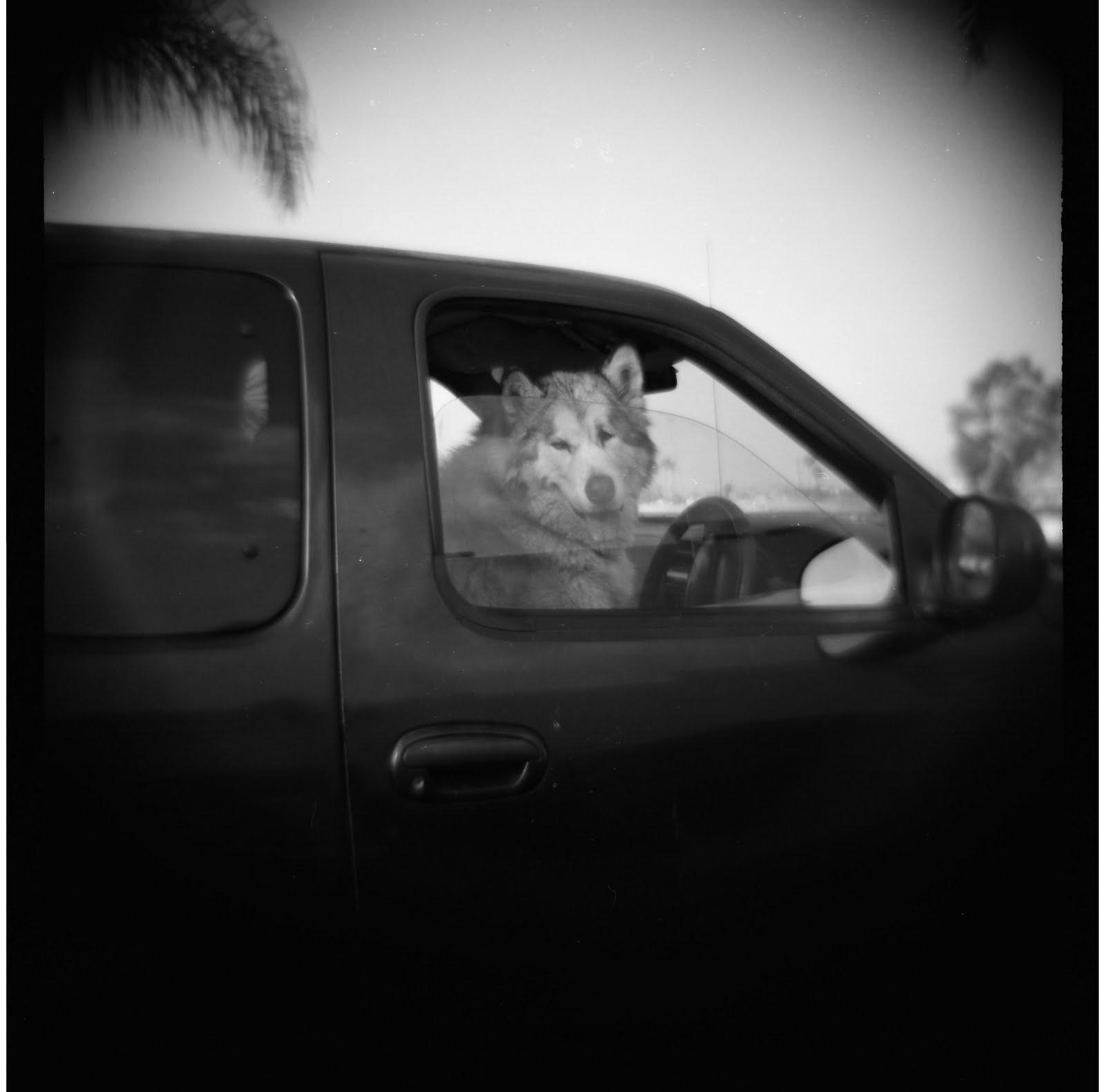 [koira+autossa]
